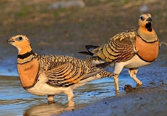 El hábitat natural y ornitológico de la laguna de Ruiz Sánchez ha sido dado a conocer en la British Birdwatching Fair 2018 a través de la guía de aves de la provincia de Sevilla