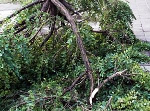 """La borrasca """"Ana"""" provoca la caída de árboles, farolas y el corte de luz a su paso por Écija."""